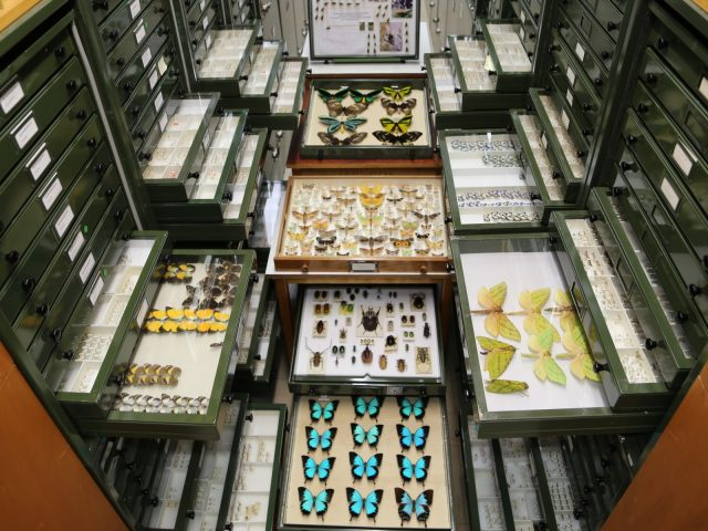 Browse Australia's natural history collections