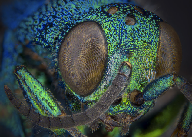 Image of an insect eye from the ALA Strategy 2020-2025